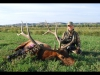 Guided Elk Hunts in Montana