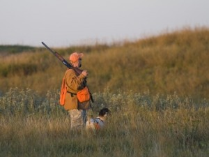 Bird hunting with a dog